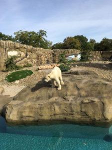 Zoo Rostock Eisbärgehege2