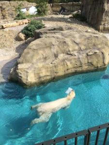 Zoo Rostock Eisbärgehege